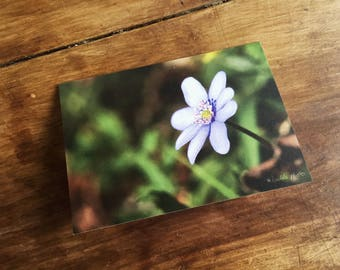 Greeting card / / Spring Awakening / / A6