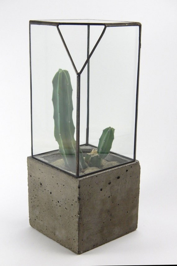 glass terrarium concrete planter centerpiece terrarium