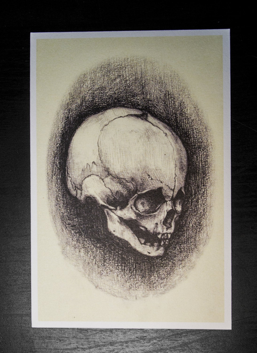 Fetal Sketch Postcard