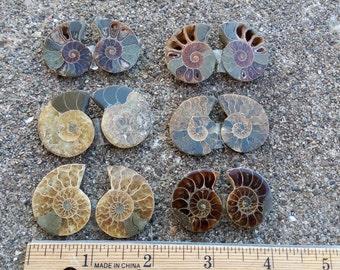 1 Pair of Split Ammonites