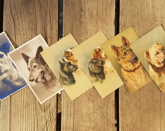 Lot 6 postcards with vintage photos and painted dogs