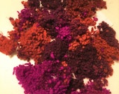 Hand-dyed WOOL NEPPS  variegated colours (fuchsia/orange/burgundy) - 20 grams