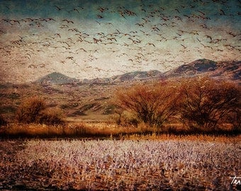 Flying Snow Geese, Surreal Goose Photo, Winter Geese, Abstract Photo, Canvas Wrap, Steve Traudt, Home Decor, Wall Art