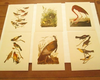 Audubon's Vintage Birds Of America Lot of 12 Picture Prints