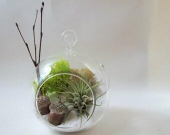 Air plant terrarium kit with acorns ; unique gift; tillandsia; air plant;terrarium;office decor