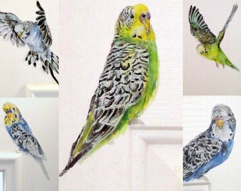 Budgie wall stickers, SET OF 5, budgie decals, bird wall decals, tropical bird decor, budgie wall art, budgerigar, budgie decor