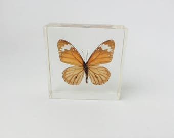 Butterfly Encased in Lucite/Butterfly Paperweight/Butterfly Home Decor/Butterfly Specimen