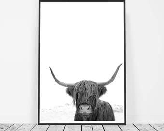 Highland Cow Art, Animal Print, Black and White Photography, Cow Photo, Animal Photography, Bison Print, Buffalo Print