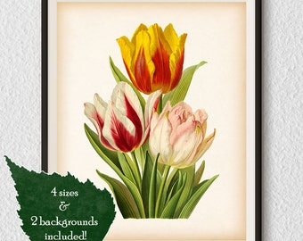 Botanical art, Tulip print, Art print vintage, Antique flower print, Flower art print, Tulip wall art, Instant download print, Floral, #26