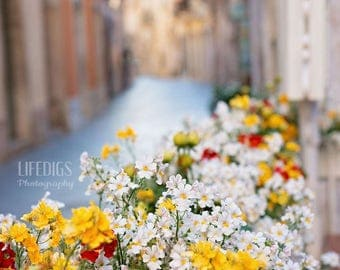 Flowers in Sicily, Pathway, Old Town, Wall Art, Home Decor, Fine Art Photograph, Travel Photography