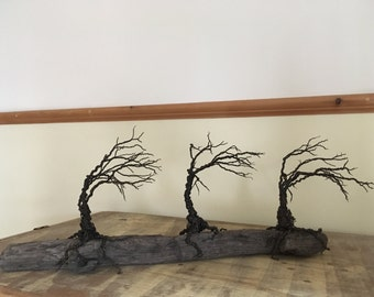 Windswept Twisted Wire Trees on a Unique Piece of Driftwood