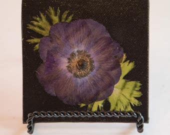 4x4 Pressed Anemones with Leaves on Black, Flat Canvas.