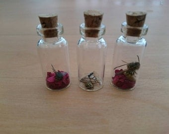 Fly, wasp and insect parts in small jars