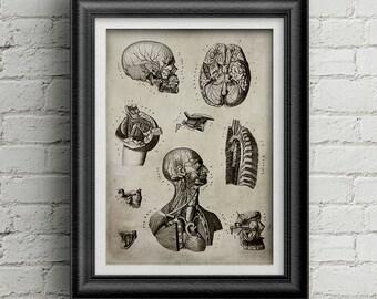 Anatomy  old book 028 - heads digital poster - antique print - old drawing - medicine digital poster - old science image