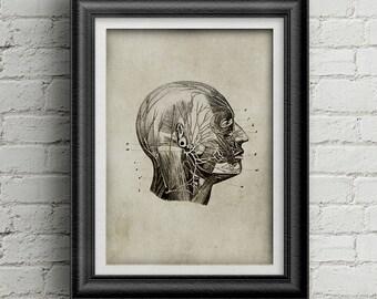 Anatomy head print 036 - medicine poster - digital print head illustration - medicine poster deco - ancient anatomy - retro poster - human