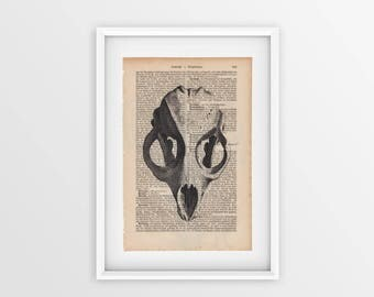 Seal skull printed on an old book page, front view of an animal skull printed on a page from 1877, Gothic font on yellow page