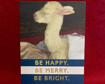 Alpaca Holiday Cards