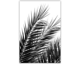 Palm Tree, Hawaiian Print, Monochrome Wall Decor, Black and White Canvas Art, Large Poster, Leaves, Minimalist