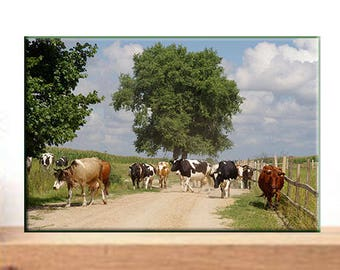 Photo print. Modern wall art. A herd of cows on a sunny summer day. Rural life. Nature. Animals. Decor. Digital photo art. Photography.