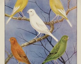A3 Bird Print Wall Art - Champion Team Of Borders (Print #6)