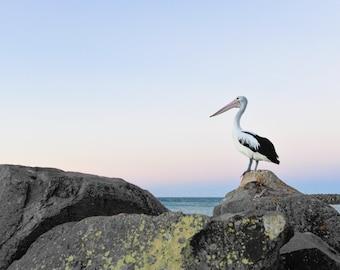 beach photography, beach, beach photo, waves, beach print, photo, fine art, pelican, seashore