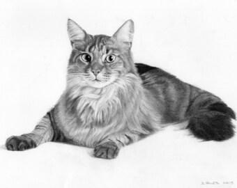custom pet portrait - graphite pencil - drawing