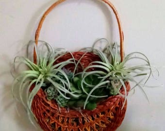 Air Plant Basket