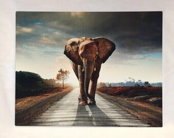 Walking With Elephants HD Metal Panel Print Ready to Hang