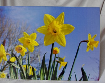 Daffodils A5 Greeting Card