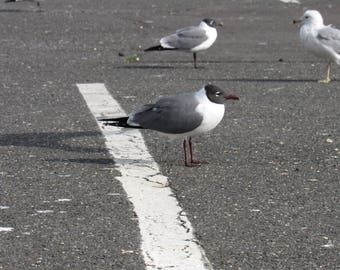 Leader of the Seagulls
