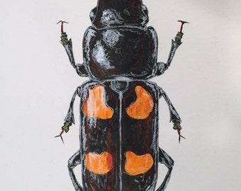 Picnic Beetle