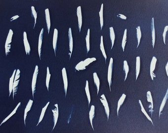 Cyanotype print of bird feathers, nature art, feather photogram, blueprint, bird art, natural history, feather print, blue feathers, medium