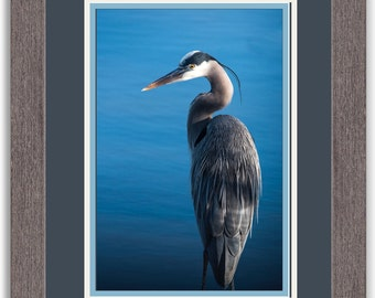 Blue Heron Framed