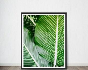 Tropical Leaf Poster , Digital Poster, Wall Decor,Home Decor, Modern Decor, Printable Instant Download