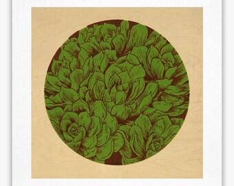 Succulent - Giclée Print