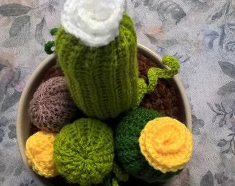 succulent plant hook