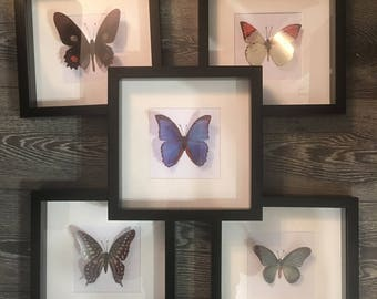 Framed butterflies faux taxidermy orange