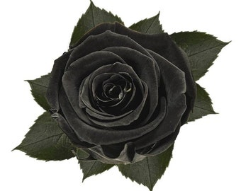 6x Preserved Black Roses 100% Real Fresh Natural Flower last for years