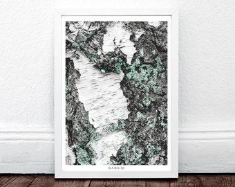 BARK III, Bark, Moss, Modern Large Print, Wall Prints Art Modern, Large Minimalist Art, Wall Print, Nature Wall Poster, Fine Art