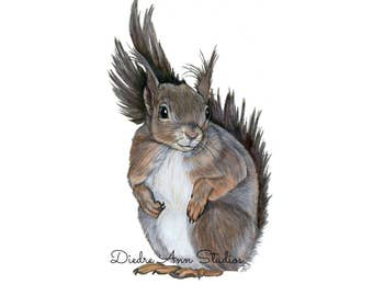 Squirrel Nursery Fine Art Print - SKUWC108