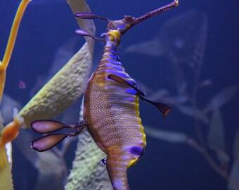 Seahorse Framed Wall Art, Ocean Wall Art, Peaceful Photography