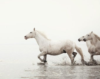"Horse Photography, Nature Photography, Large Wall Art Print, Horse Art, Horse Decor, White Horses in Water, ""Walking Softly"""