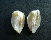 RESERVED - Large Feather Pearls - Pair - 11x19x7.5mm