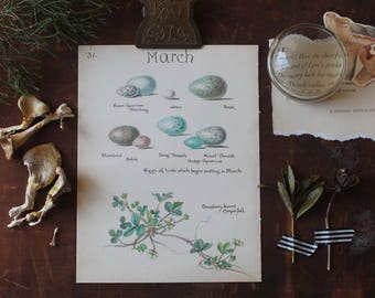 Charming Vintage Watercolor Art, Bird Egg, Blue Spotted Book Page, Print, Edwardian Era Nature Drawing, March Month of March Spring Birthday