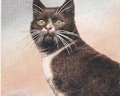 Cat on alert vintage English postcard, cats vintage postcard, SharonFosterVintage Salmon, Twelveoaks