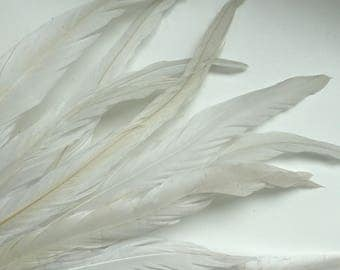 COQUE TAIL FEATHERS Loose / Off White,  Not dyed, All Natural /  190