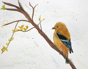 American Goldfinch Painting Yellow Bird Watercolor Contemporary Fine Art Modern Rustic Wall Decor Songbird in Branches  Ready to Ship