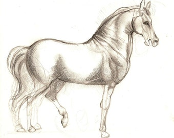 DaVinci's Horse, Original Sketch Drawing