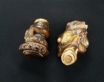 Stromatolite - two pieces - rare agatized