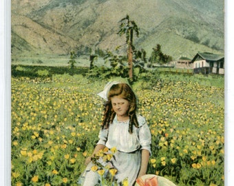 Young Girl Picking California Poppy Flowers CA 1910c postcard